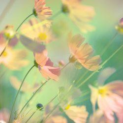 Ljuddämpande tavla blommotiv