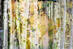 Ljuddämpande tavla abstrakt björkmotiv