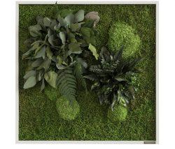 Mindre mosstavlor med växter